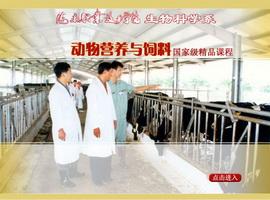 动物营养与饲料