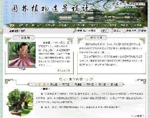 园林植物造景设计