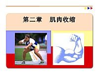 运动生理学课件