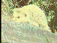 动物学视频