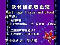 组织学与胚胎学_刘广益_软骨与骨、血液淋巴和血发生