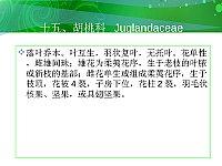 园林植物_张建新_胡桃科Juglandaceae