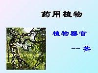 药用植物开发利用_杨军衡_植物器官茎