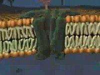 结构 细胞膜 微生物学/细胞膜结构3_微生物学